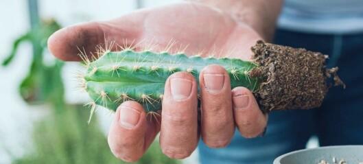 Hva har kaktuser med rehabilitering å gjøre?